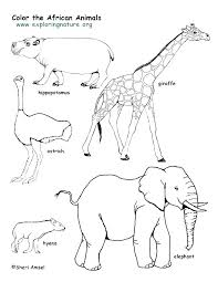 Forest Animal Coloring Page Rainforest Animal Coloring Pages Free Collection Of Animals Coloring