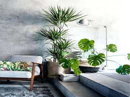 office indoor plants. Good Office Plants Awesome Remarkable Elegant Indoor In The Easy