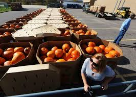 On Wisconsin: World pumpkin record poised to fall in Richland ...