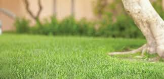 growing maintenance tips from our pros how to plant grass seed for a new lawn