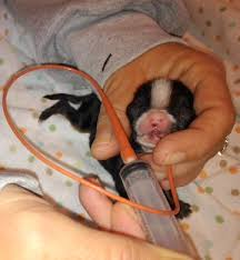 caring for cleft palate pups