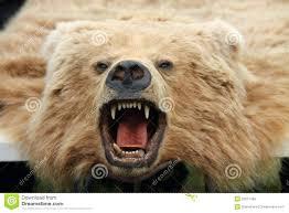 polar bear skin rug fake bear head rug skin bear skin rug for craigslist fake bear skin rug with head uk