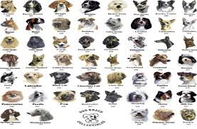 Dog Breed Chart With Names Big Dog Breed Chart Dog Breed Chart With Names Chart Of All