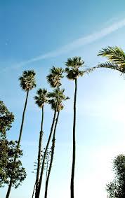 Plain Palm Trees Tumblr Vertical Destinations Pinterest Inside Perfect Ideas