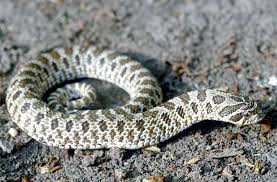 Black Snake With Diamond Pattern Cool Design Ideas