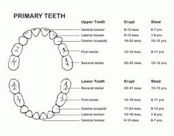 Tooth Eruption Chart Sound Family Medicine