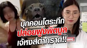 บุกคอนโดพิตบูล!! ปล่อยว่อนวิ่งทั้งตึก เจอเจ้หงส์ด่ากราด : Khaosod TV -  YouTube