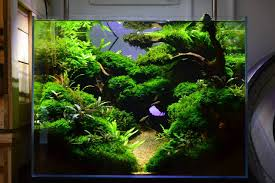 Cool Aquariums Favourites Display Tank At Exotic Aquatic Amazing Scenery So