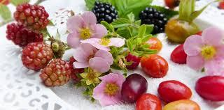 Image result for Popular Diet Plans