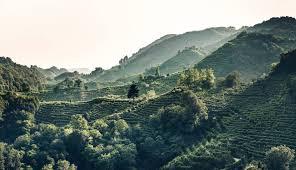 Colline del Prosecco di Conegliano e Valdobbiadene Patrimonio UNESCO