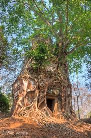 Exotic Tree Houses 1426 Best Tree Houses Exotic Homes Images On Pinterest