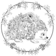 Cute Hedgehog Coloring Page Design Ms Drawings Pinterest