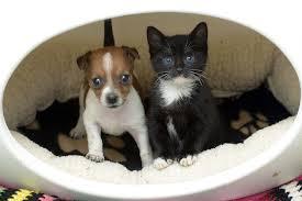 cute puppy and kitten best friends. Plain Cute Abandoned Puppy And Kitten Become Best Friends 12 Pics In Cute Puppy And Kitten Best Friends