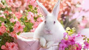 Easter Bunny Wallpapers Free ...