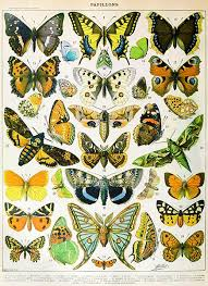 Butterfly Papillons Chart Illustration Poster In 2019