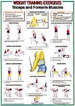 Weight Exercise Chart Free Yukon Fitness Triceps Forearm Muscles