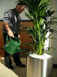 office plant displays. Servicing Of A Stainless Floor Plant Display Office Displays P