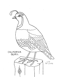 Small Picture Adult quail coloring page California Quail Coloring Page Caquail