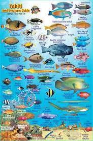 Samoan Fish Chart