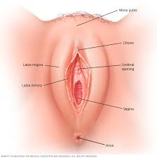 Picture of womens vagina