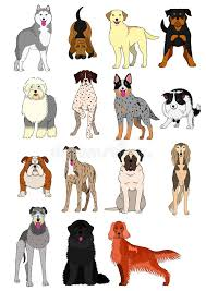 Kinds Of Dogs Chart Group Of Large And Middle Dogs Breeds Hand Drawn Chart Stock