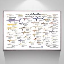 Types Of Sharks Chart Us 11 88 40 Off Types Of Sharks Chart Art Canvas Poster Home Decor Picture For Living Room In Painting Calligraphy From Home Garden On