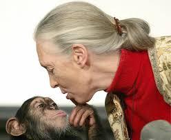 Image result for locked chimpanzee