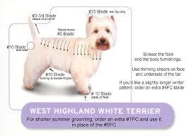 West Highland Terrier Growth Chart Kristen Simpson Kristen2772 On Pinterest