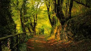 Resultado de imagen de bosque