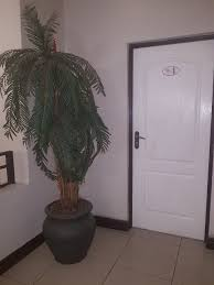 olive garden guest house guesthouse reviews bloemfontein south africa tripadvisor
