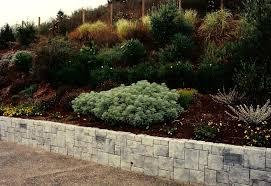 san francisco landscaping photo 7