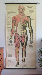 Vintage Full Body Muscles Educational Medical School Chart Anatomy Wall Chart