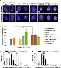 x chromosome coalescence in female