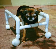 disabled dog in a homemade dog wheels