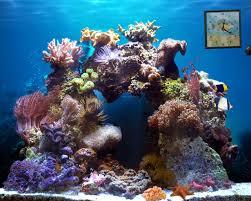Aquarium 3d Wallpaper Animated ...