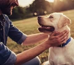 Als hunderasse bezeichnet man eine unterscheidbare züchtung der haushunde. Susse Hunde Die Du Unbedingt Kennen Solltest Dogbible