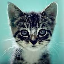 cats and kittens pictures. Wonderful Kittens Cats And Kittens Intended Pictures
