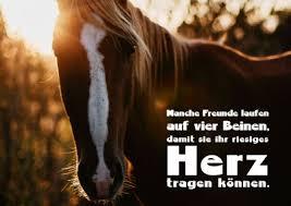 Pferde Sprüche Freundschaft Italiaansinschoonhoven