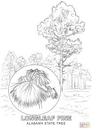 Small Picture Alabama State Tree coloring page Free Printable Coloring Pages