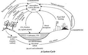 short notes on carbon cycle nitrogen cycle and sulphur cycle image
