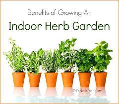 indoor herb garden herbs kit with grow light