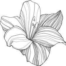 Coloring Pages : Flower Drawing Clipart 8czKzna6i Coloring Pages ...