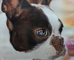 boston terrier acrylic painting