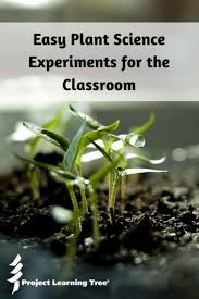 Easy Plant Science Experiments For The Classroom Project