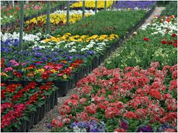 flowers nursery montgomery grimes walker garden information find a large selection at our flowers