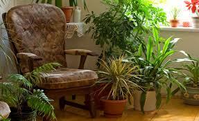 5 plantas de interior para desestresar tu hogar que realmente funcionan!