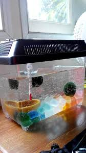 technical ph temperature and co2 levels for optimal marimo growth