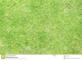 grass field texture. Green Grass Top View. Natural Photo Texture. Field Background. Texture A