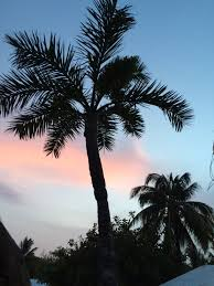 palm trees sunset tumblr. Blue, Cancun, Clouds, Cotton Candy, Hipster, Mexico, Palm Trees, Trees Sunset Tumblr