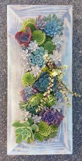 Small Picture 1242 best Endless Succulent Ideas images on Pinterest Succulents